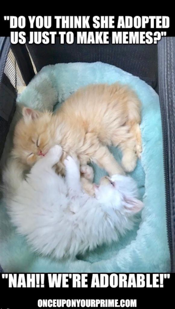 kittens4