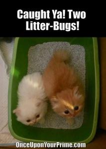 kittens9